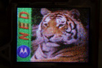 Tigernedpr